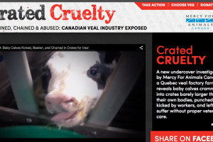 crated cruelty feature pic