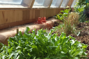permaculture feature pic