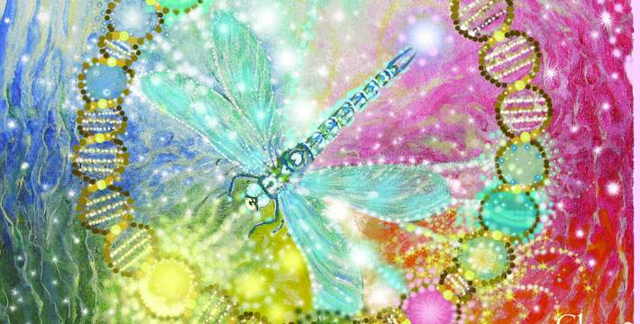 dragonfly-feature-pic